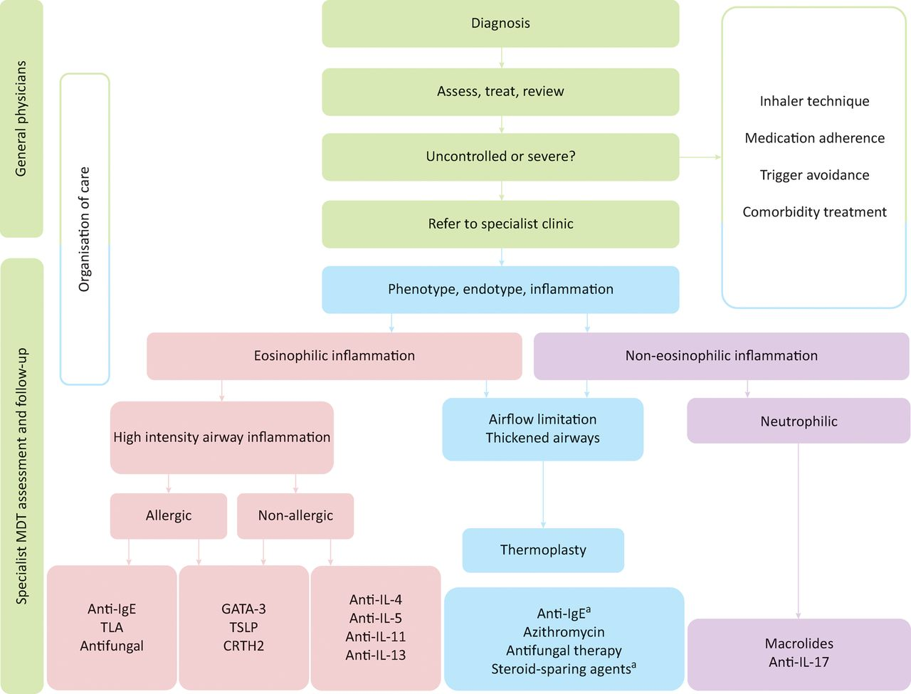 Diagnosis and treatment of severe asthma: a phenotype ...